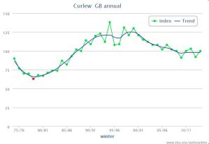 Graph shows the changing Curlew population in Great Britain (Wetland Bird Survey)