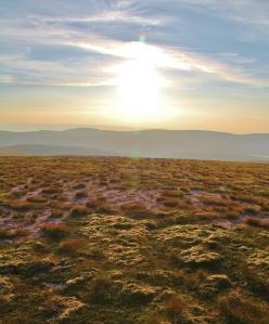 Racomotrium heath is an important and increasingly rare habitat (Alistair Baxter)