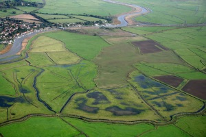 By creating shallow ditches, which add water and insects to grassland habitats, Lapwing productivity is increased: Mike Page/RSPB