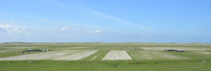 Machair thinner (JC)