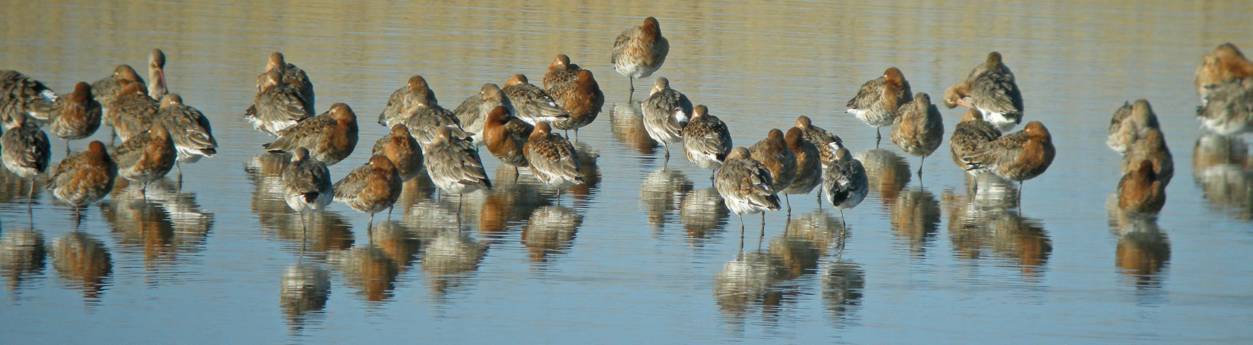 130420 N6355 flock Cley-SP