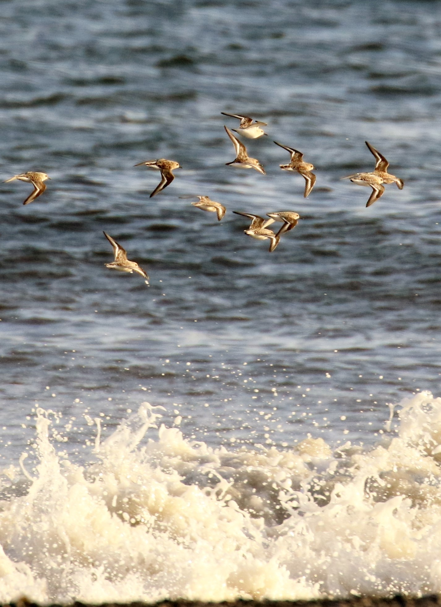 waders and spume TGG