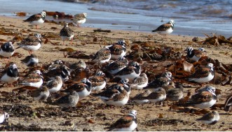 turnstone-header