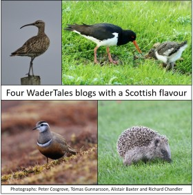 scottish-wadertales