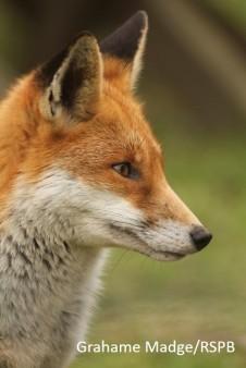 Blog fox