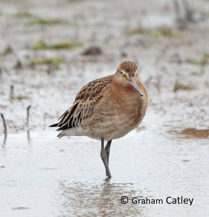 Blog Blackwit
