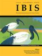 IBIS image