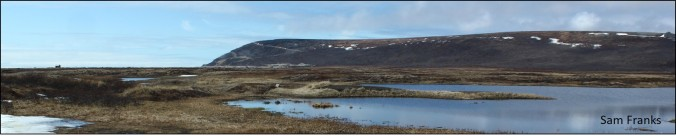 banner habitat
