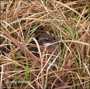 nesting RNP