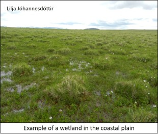 blog coastal wetland