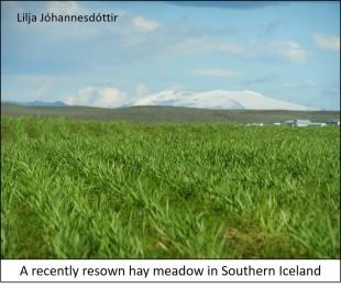 blog hay field