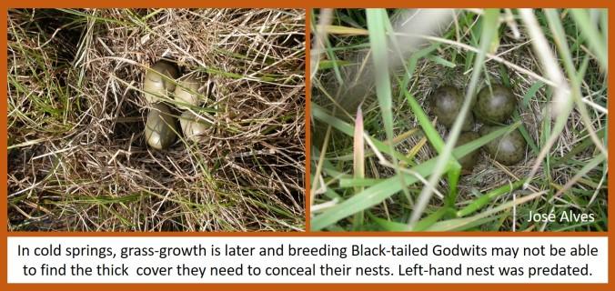 blog nest comparison