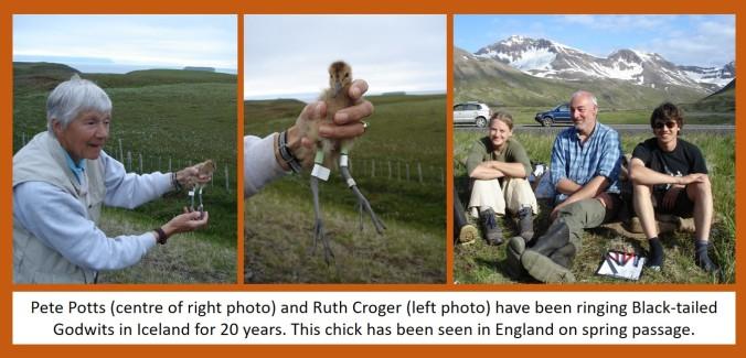 blog pete ruth