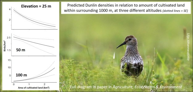 dunlin graphic