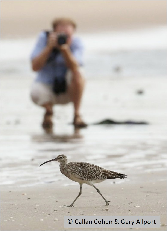 blog photographer