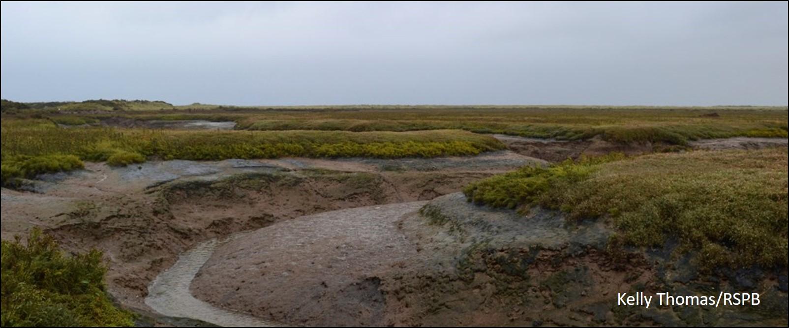 blog muddy creek