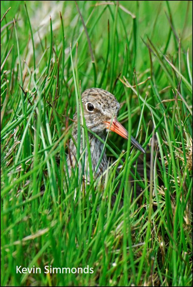 blog nesting RK