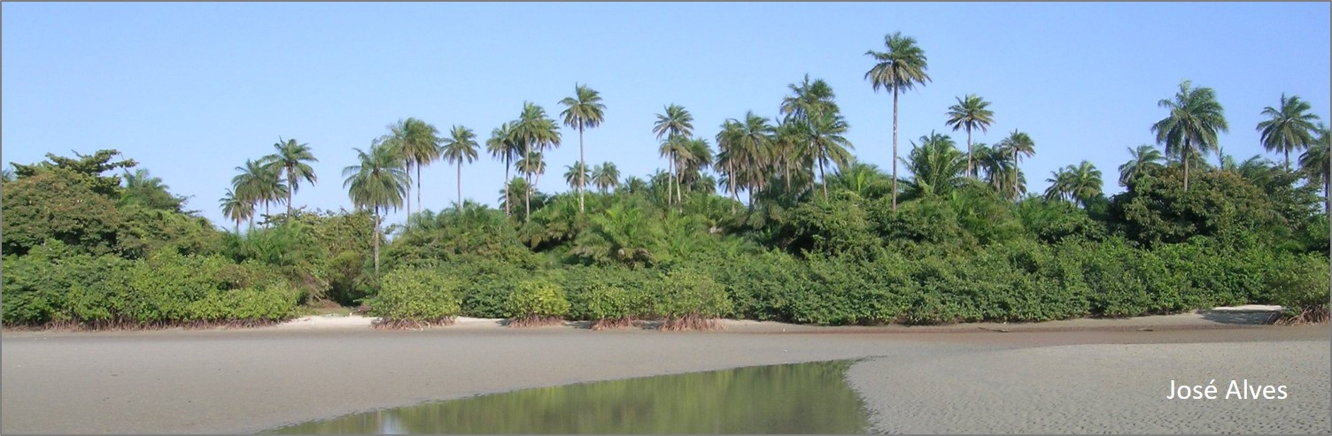 blog mangroves and beach