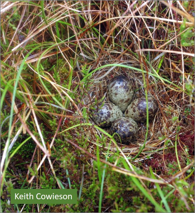 blog Snipe nest