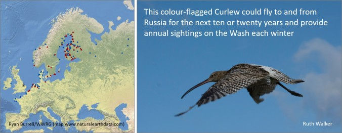 wwrg curlew map etc