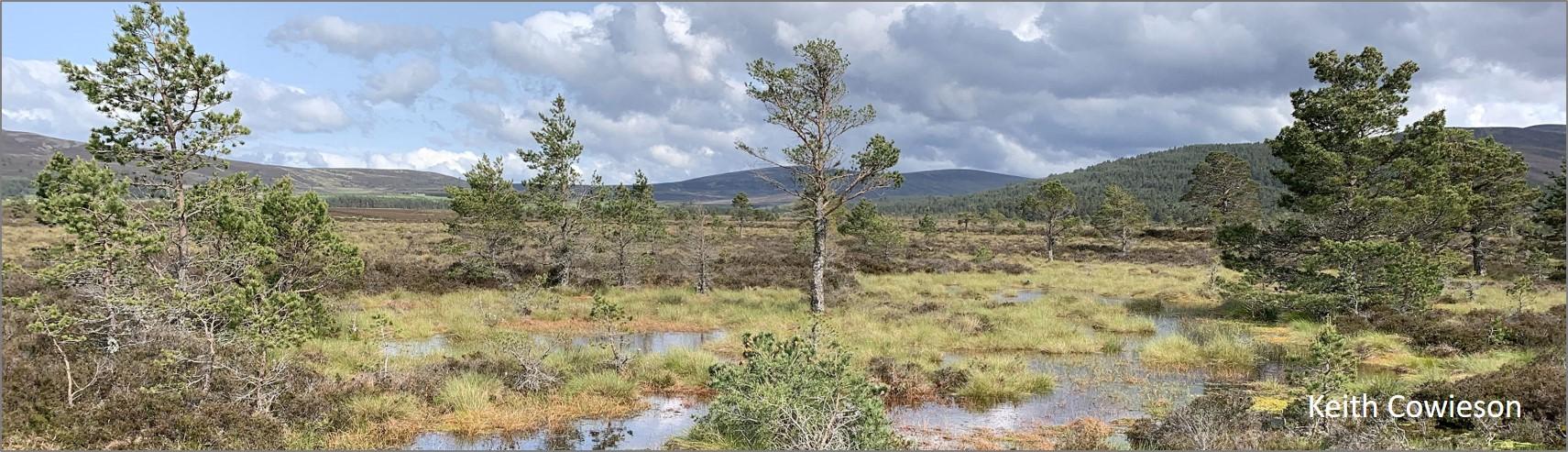 blog wood sp habitat