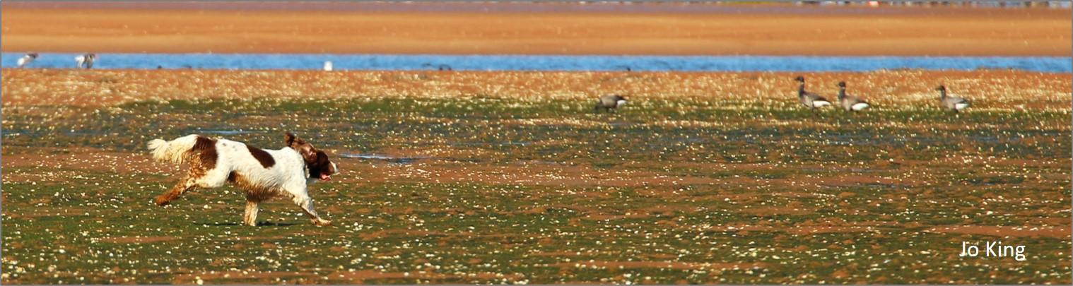 blog chasing geese