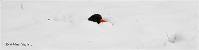 blog snow