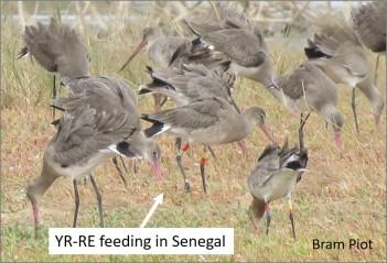 bg Senegal