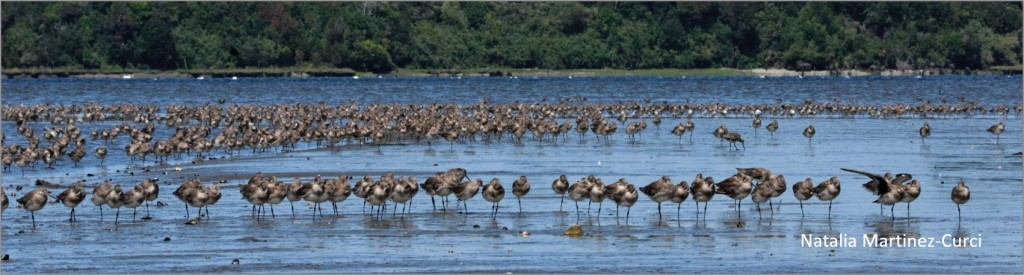 This image has an empty alt attribute; its file name is pic-chile-flock.jpg