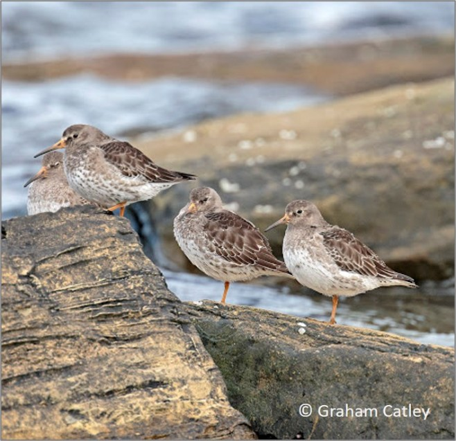 Waders on the coast